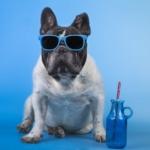¡Ya llega el verano! ¿Cómo proteger a tu perro del calor?