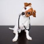 ¿Sabés cómo evitar la artrosis en perros?